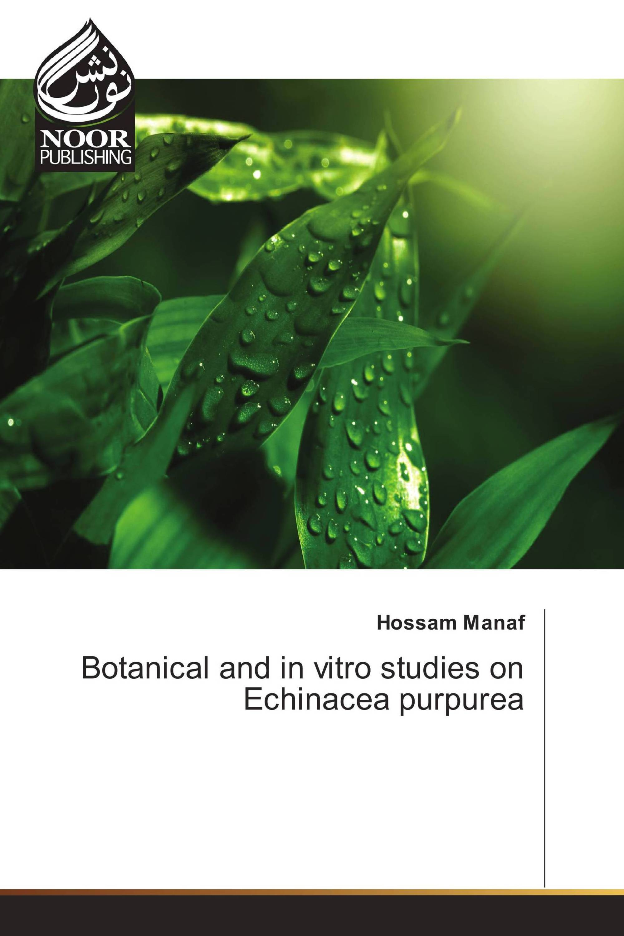Botanical and in vitro studies on Echinacea purpurea