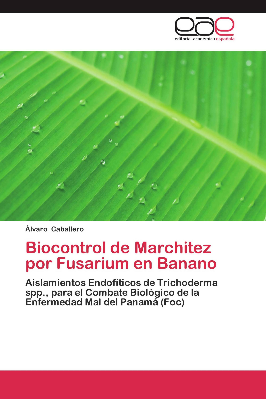 Biocontrol de Marchitez por Fusarium en Banano