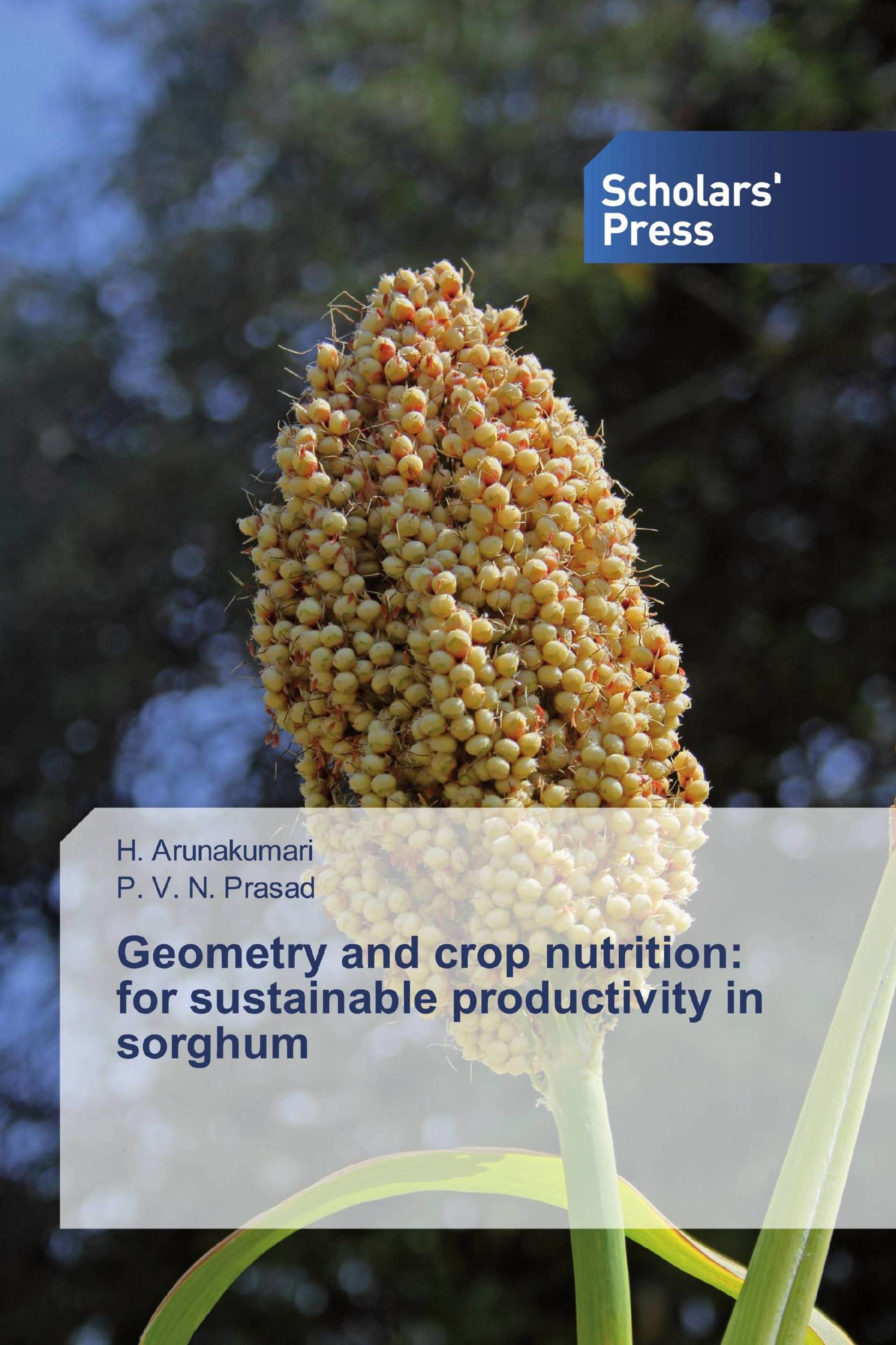 Geometry and crop nutrition: for sustainable productivity in sorghum