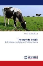 The Bovine Testis
