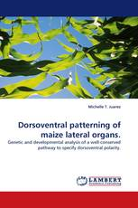 Dorsoventral patterning of maize lateral organs.