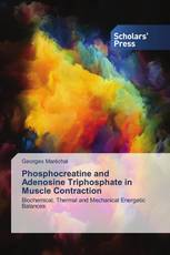 Phosphocreatine and Adenosine Triphosphate in Muscle Contraction