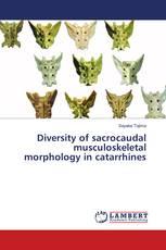 Diversity of sacrocaudal musculoskeletal morphology in catarrhines