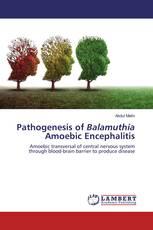 Pathogenesis of Balamuthia Amoebic Encephalitis