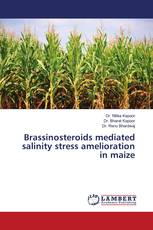 Brassinosteroids mediated salinity stress amelioration in maize