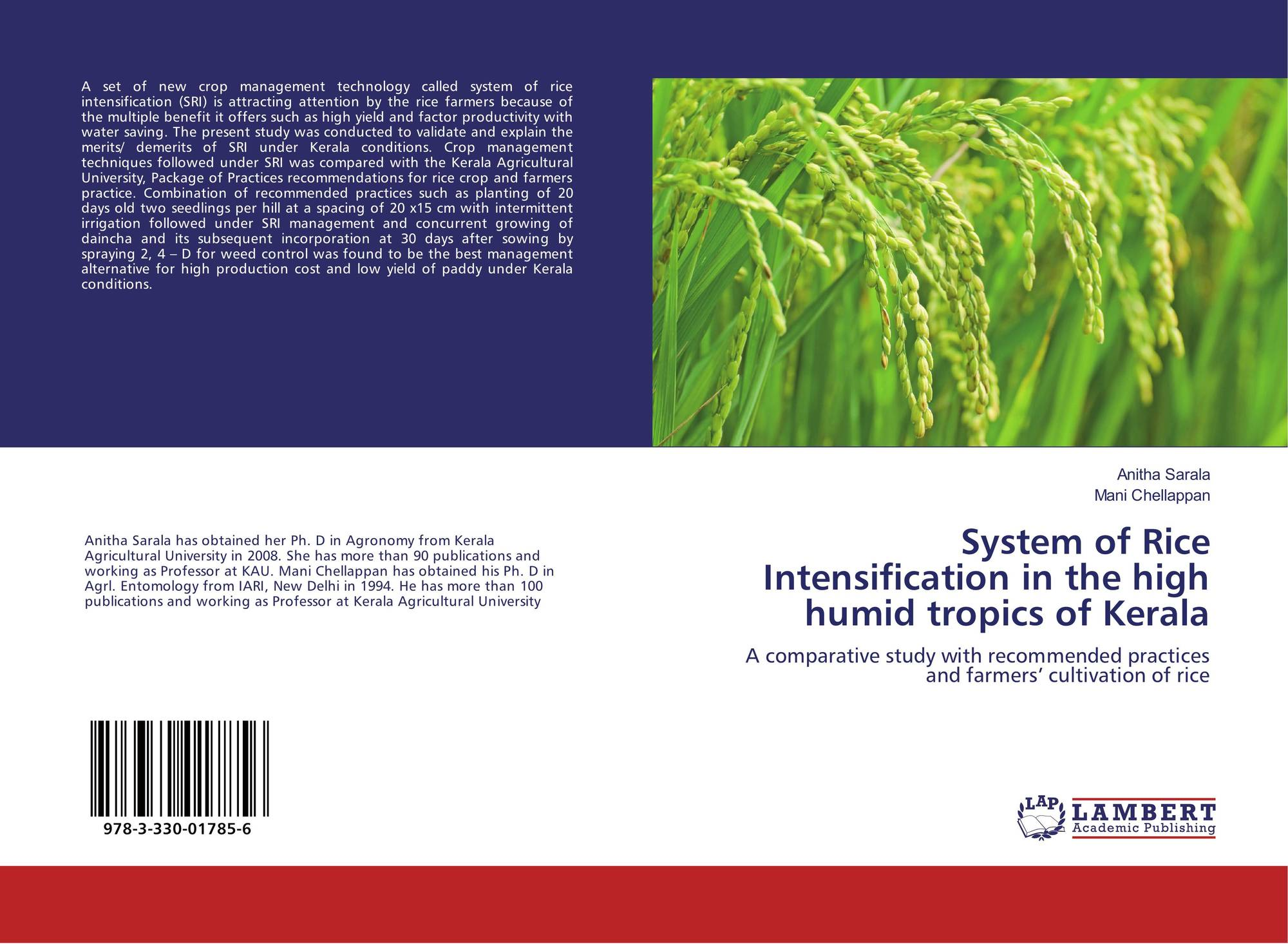 thesis on system of rice intensification System of rice intensification (sri) is a new system of rice cultivation for increasing rice productivity  thesis ,jnkvv [2] 2sivanagaraju p(2006) , traditional .