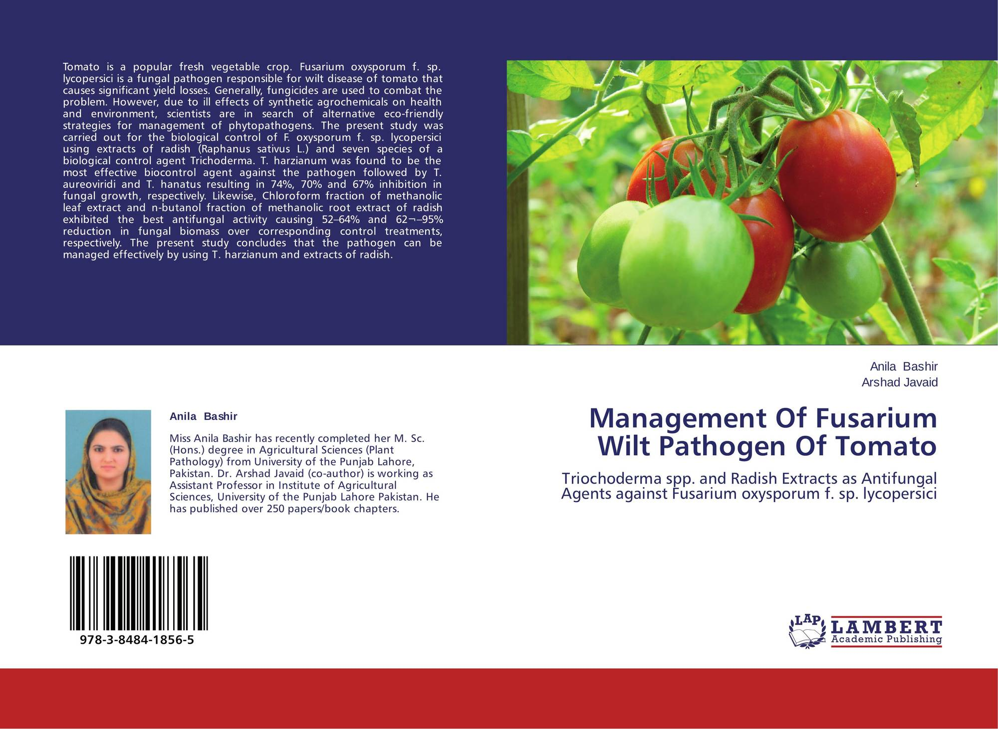 fusarium wilt of tomato thesis Tomato production in ethiopia: constraints and opportunities and fusarium wilt reducing the yield tomato is one of the regional export crops of the.