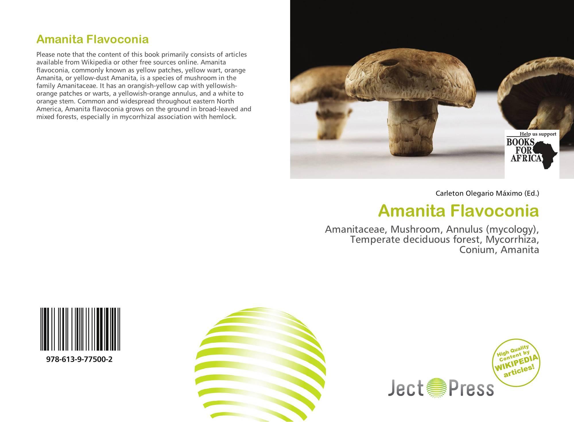 Amanita Flavoconia 978 613 9 77500 2 6139775000 9786139775002