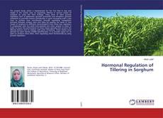 Bookcover of Hormonal Regulation of Tillering in Sorghum