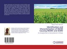 Identification and Characterization of MLND Causing MCMV and SCMV的封面