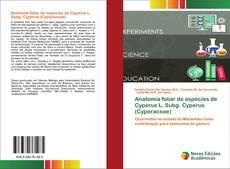 Обложка Anatomia foliar de espécies de Cyperus L. Subg. Cyperus (Cyperaceae)