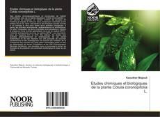 Couverture de Etudes chimiques et biologiques de la plante Cotula coronopifolia L.