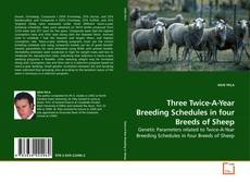 Обложка Three Twice-A-Year Breeding Schedules in four Breeds of Sheep