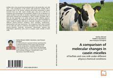 Copertina di A comparison of molecular changes in casein micelles