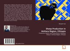 Bookcover of Sheep Production in Amhara Region, Ethiopia