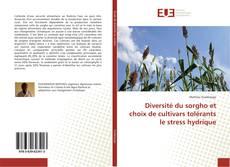 Bookcover of Diversité du sorgho et choix de cultivars tolérants le stress hydrique