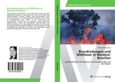Brandrodungen und Wildfeuer in Nordost-Brasilien kitap kapağı