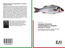 Copertina di Indagine Anatomo-istopatologica su Spigole pescate in fiume