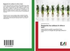 Couverture de Rapporto tra coltura in vitro e luce