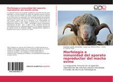 Bookcover of Morfología e inmunidad del aparato reproductor del macho ovino