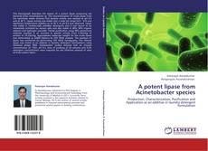 Bookcover of A potent lipase from Acinetobacter species