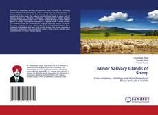 Bookcover of Minor Salivary Glands of Sheep