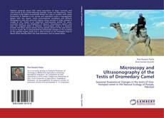 Обложка Microscopy and Ultrasonography of the Testis of Dromedary Camel