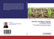 Bookcover of Salinity and Boron Toxicity in Wheat Plants
