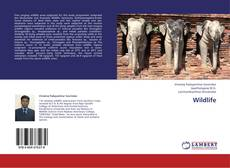 Bookcover of Wildlife