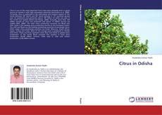 Borítókép a  Citrus in Odisha - hoz