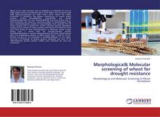 Bookcover of Morphological& Molecular screening of wheat for drought resistance