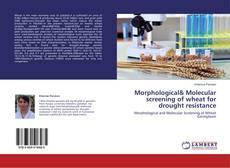 Morphological& Molecular screening of wheat for drought resistance kitap kapağı