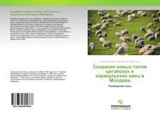 Создание новых типов цигайских и каракульских овец в Молдове kitap kapağı