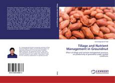 Bookcover of Tillage and Nutrient Management in Groundnut