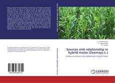 Bookcover of Sources sink relationship in hybrid maize (Zeamays L.)