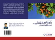 Bookcover of Shoot tip grafting in Nagpur Mandarin (Citrus reticulata Blanco)