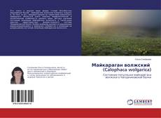 Borítókép a  Майкараган волжский (Calophaca wolgarica) - hoz