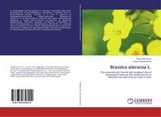 Обложка Brassica oleracea L.