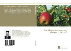 Bookcover of Fire Blight Resistance of Malus x robusta 5