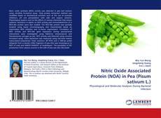 Nitric Oxide Associated Protein (NOA) in Pea (Pisum sativum L.)的封面
