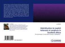Bookcover of Hybridisation to exploit heterosis in sorghum in Southern Africa