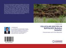 Обложка FOLLICULAR OOCYTES IN BUFFALOES (Bubalus bubalis):