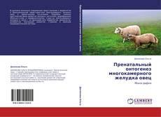 Copertina di Пренатальный онтогенез многокамерного желудка овец