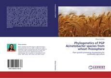 Bookcover of Phylogenetics of PGP Acinetobacter species from wheat rhizosphere