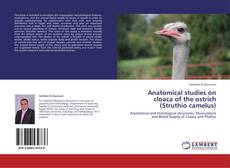 Anatomical studies on cloaca of the ostrich (Struthio camelus) kitap kapağı