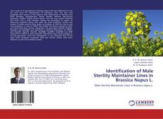 Bookcover of Identification of Male Sterility Maintainer Lines in Brassica Napus L.
