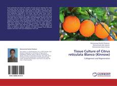 Bookcover of Tissue Culture of Citrus reticulata Blanco (Kinnow)