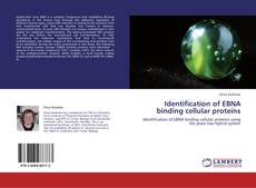 Обложка Identification of EBNA binding cellular proteins