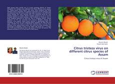 Bookcover of Citrus tristeza virus on different citrus species of Assam
