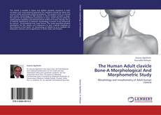 Bookcover of The Human Adult clavicle Bone-A Morphological And Morphometric Study
